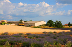 Provence. Typical landscape, lavender and  wheat   near  Valensole, Provence, France Stock Images