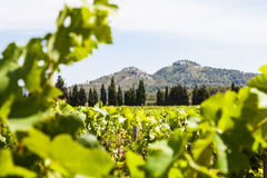 Provence vineyard Stock Photos