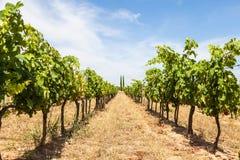 Provence vineyard Stock Photos