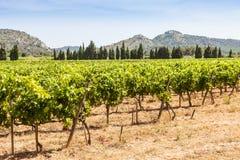 Provence vineyard Royalty Free Stock Photos