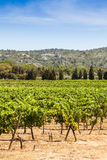 Provence vineyard Royalty Free Stock Photography