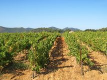 Provence vineyards Royalty Free Stock Photography