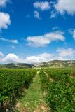provence vingård Arkivbild