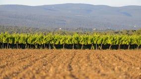 Provence winnicy Zdjęcia Stock