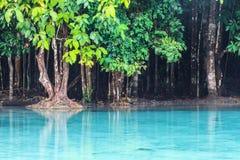 Province d'Emerald Pool (Sra Morakot) Krabi, Thaïlande Image libre de droits