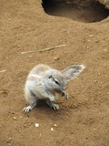 Province de cap d'écureuil Image stock
