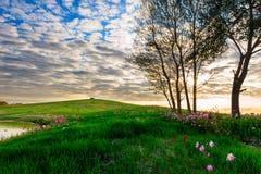 Le matin de la colline Photos libres de droits