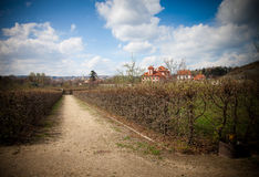 The province landscape with a vineyard. Spring in the Czech Repu Royalty Free Stock Images