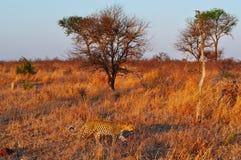 Provinces de parc national de Kruger, de Limpopo et de Mpumalanga, Afrique du Sud image libre de droits