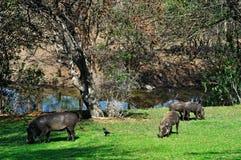 Provinces de parc national de Kruger, de Limpopo et de Mpumalanga, Afrique du Sud Photographie stock libre de droits