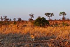 Provinces de parc national de Kruger, de Limpopo et de Mpumalanga, Afrique du Sud photo stock