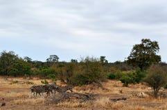 Provinces de parc national de Kruger, de Limpopo et de Mpumalanga, Afrique du Sud Photos libres de droits