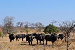 Provinces de parc national de Kruger, de Limpopo et de Mpumalanga, Afrique du Sud images libres de droits