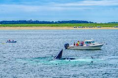 Provincetown, Cape Cod, Massachusetts, de V.S. - 15 Augustus de Boot van 2017, zijn bemanning en walvis royalty-vrije stock fotografie
