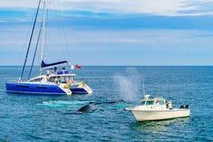 Provincetown, Cape Cod, Massachusetts, de V.S. - 15 Augustus, de Walvis van 2017 tussen twee kleine schepen Royalty-vrije Stock Fotografie