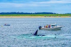 Provincetown, Cape Cod, Massachusetts, US - 15. August 2017 Boot, seine Mannschaft und Wal Lizenzfreie Stockfotografie