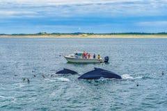 Provincetown, Cape Cod, Massachusetts, US - 15. August 2017 Boot, seine Mannschaft und Wal Stockbild