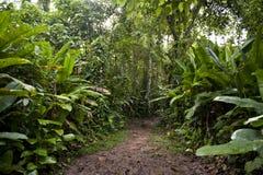 Provincia de Tambopata Imágenes de archivo libres de regalías