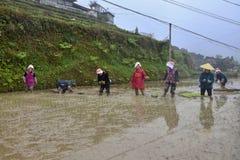 PROVINCIA di GUIZHOU, †della CINA «CIRCA APRILE 2019: La donna ha messo le giovani piante di riso nella risaia sommersa immagini stock