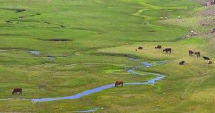 Provincia di Yunnan della Cina, il plateau   Immagine Stock Libera da Diritti