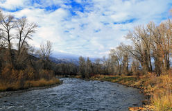 Provo River with autumn leaves Stock Image