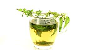 Provocação de picada, plantas medicinais em uma cerca, close up e chá filme