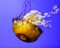 Provocação do mar Fotografia de Stock