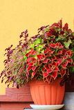 Provocações coloridas bonitas Foto de Stock
