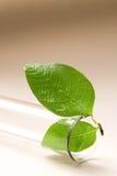 Provrör och blad arkivbild