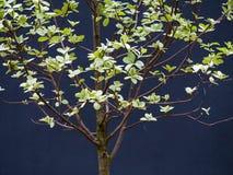 Provträd Arkivfoto