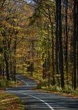 prowadnikowy jesień jednokierunkowy Zdjęcia Royalty Free