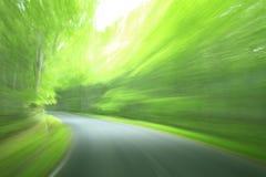 prowadnikowy las Zdjęcie Stock