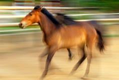 prowadzić koni. Obrazy Stock