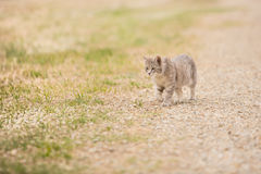 Prowling alley cat Stock Photography