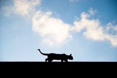 Prowling Stray Cat. Stray cat silhouette along the top of a building against a partly cloudy blue sky Royalty Free Stock Photo