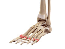 The proximal joint capsules Stock Photography