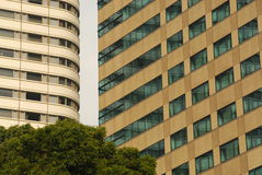 Proximity of buildings. Two modern office buildings in close proximity and a bit of a green tree Royalty Free Stock Image
