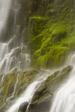 Proxy Falls Royalty Free Stock Image