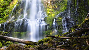 Proxy Falls in Afternoon Light. Afternoon light filters through the forest at beautiful Proxy Falls, near Eugene, Oregon royalty free stock image