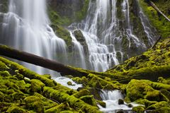 Proxy Falls in Oregon with mossy rocks and logs stock image