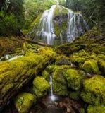Proxy falls in oregon rain forest stock image