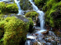 Proxy Falls side waters. Smooth flowing Proxy Falls on the Old Mckenzie Highway in Western Oregon`s Cascade Mountains running through moss covered rocks on a stock photography