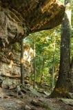 Proyección de la roca en el bosque Imagenes de archivo