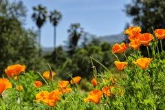 150 Prozent Kalifornien Stockfoto