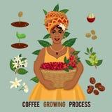 Prozess des Pflanzens und des Wachsens eines Kaffeebaumplakats Wachsender Prozess des Kaffees Stockfotografie
