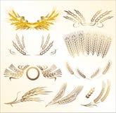 Préparation de blé Photos stock