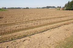 Préparer le champ pour la plantation Photo stock
