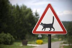 Prudentemente, gatti! Fotografia Stock