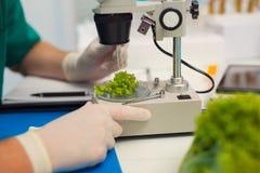 Prueba de la comida genético modificada en el laboratorio Imagen de archivo libre de regalías