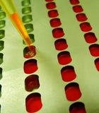 Prueba de la sangre en el laboratorio Imágenes de archivo libres de regalías